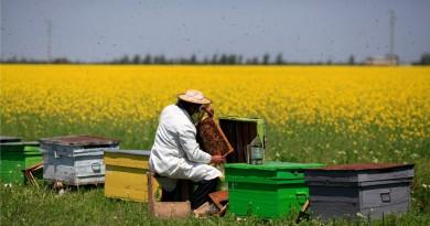 beekeeper (1)