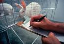 Pomysł na karierę: technolog laboratorium zwierzęcego