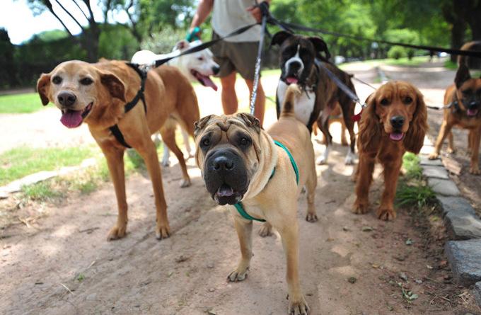 dog-career-walker